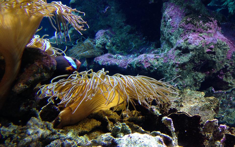 aquarium-1047590_960_720