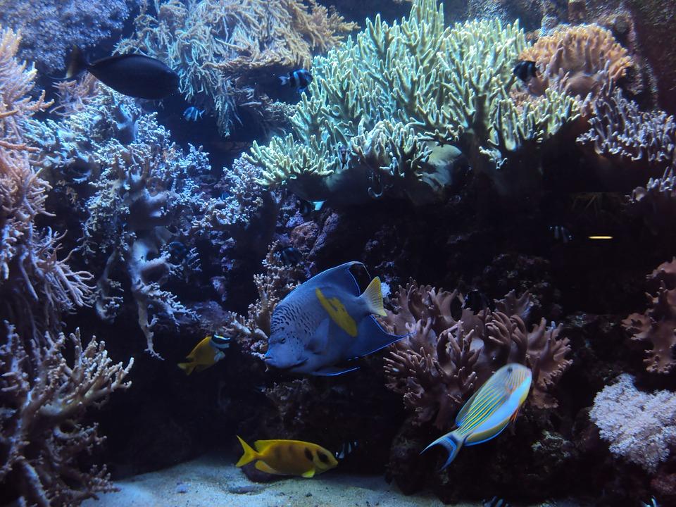 aquarium-1192348_960_720
