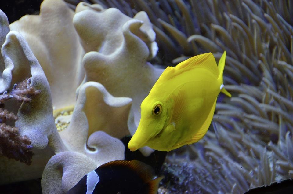 aquarium-1274518_960_720