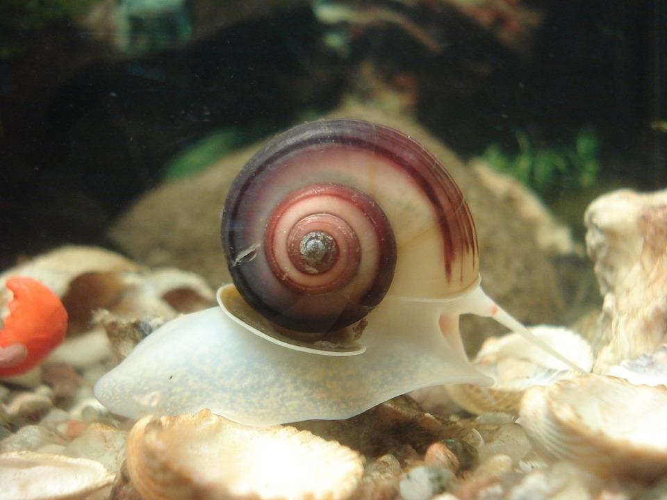 aquarium-16625_960_720