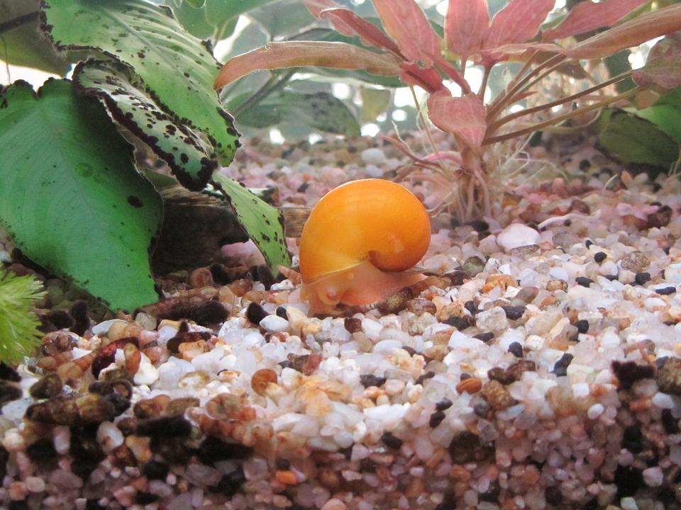 aquarium-983805_960_720
