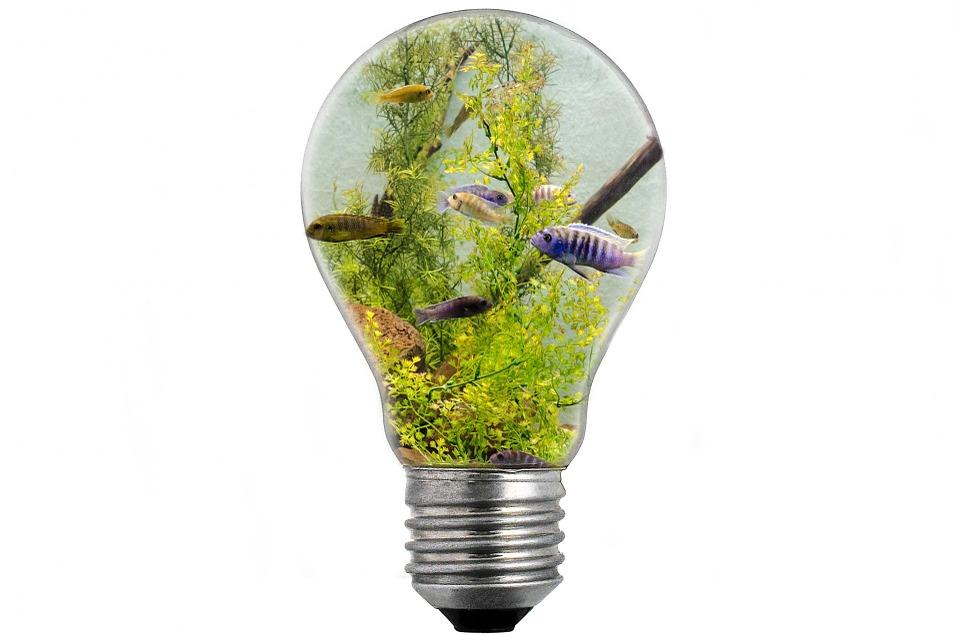 bulb-313699_960_720