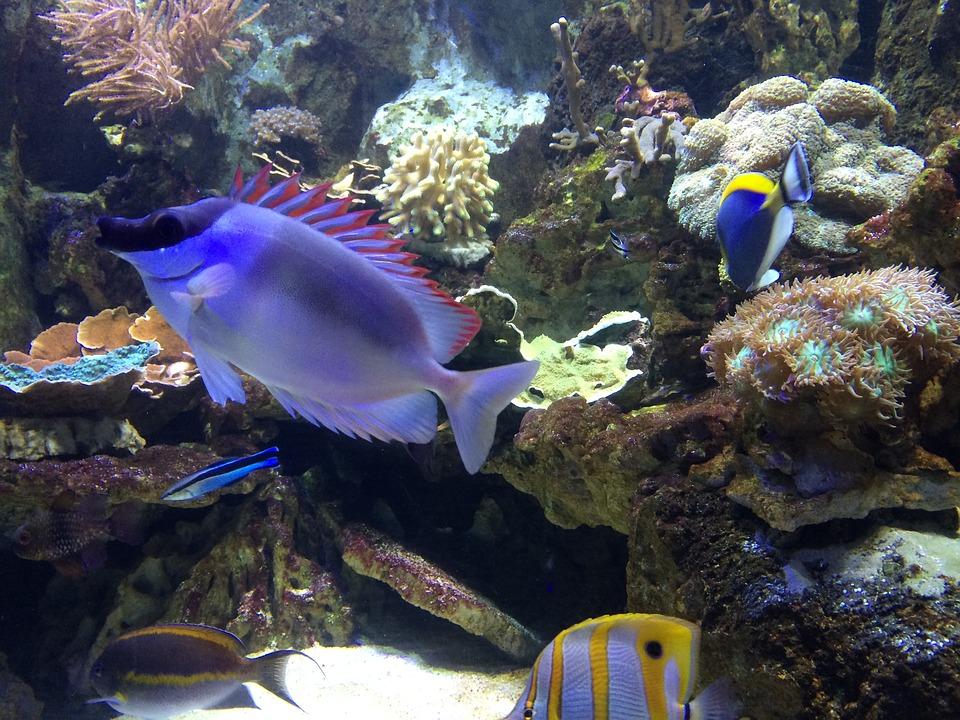 fish-1098771_960_720