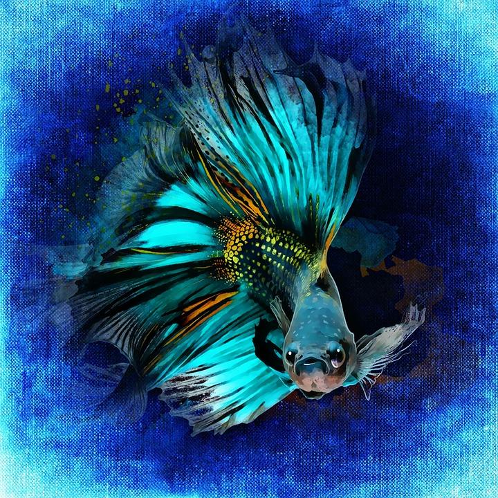fish-1373600_960_720