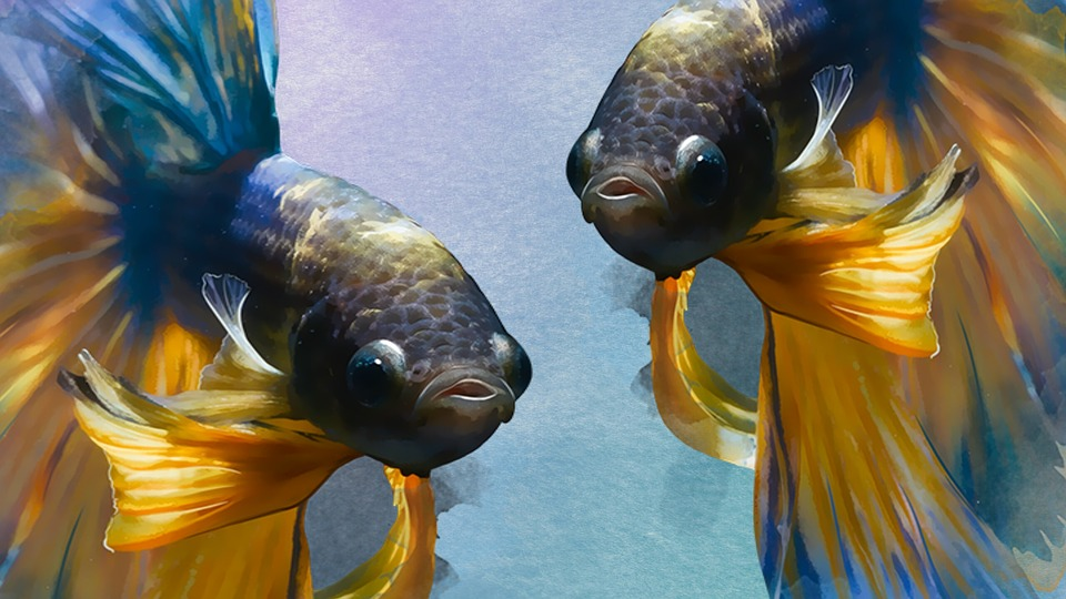 fish-1373657_960_720