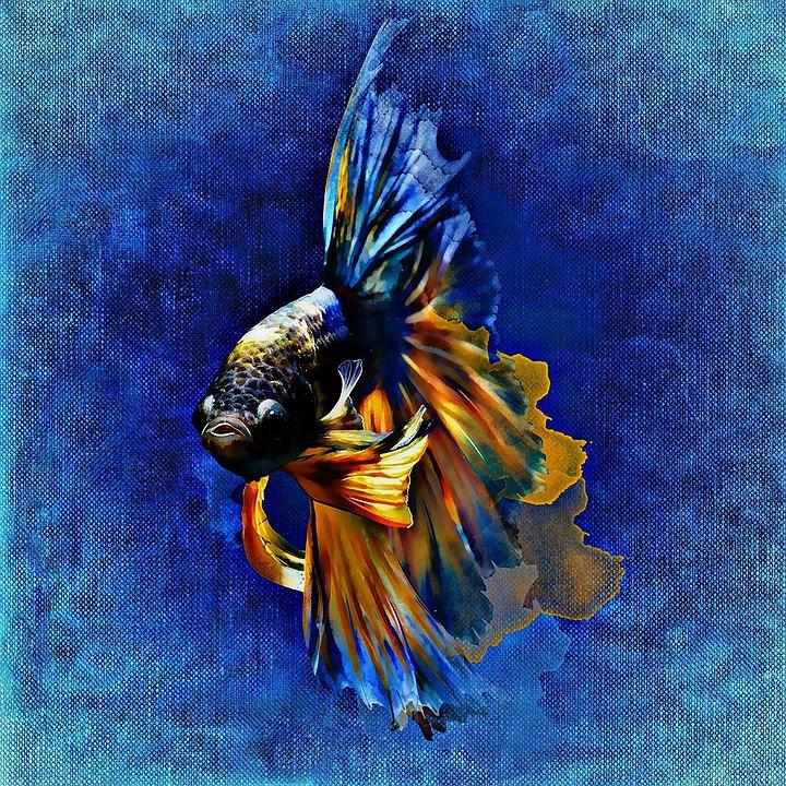 fish-1381789_960_720