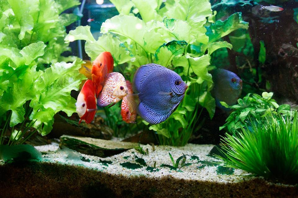 fish-2204687_960_720