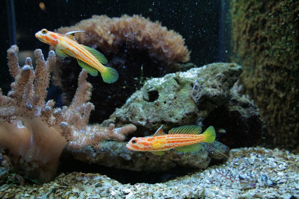 marine-fish-202695_960_720