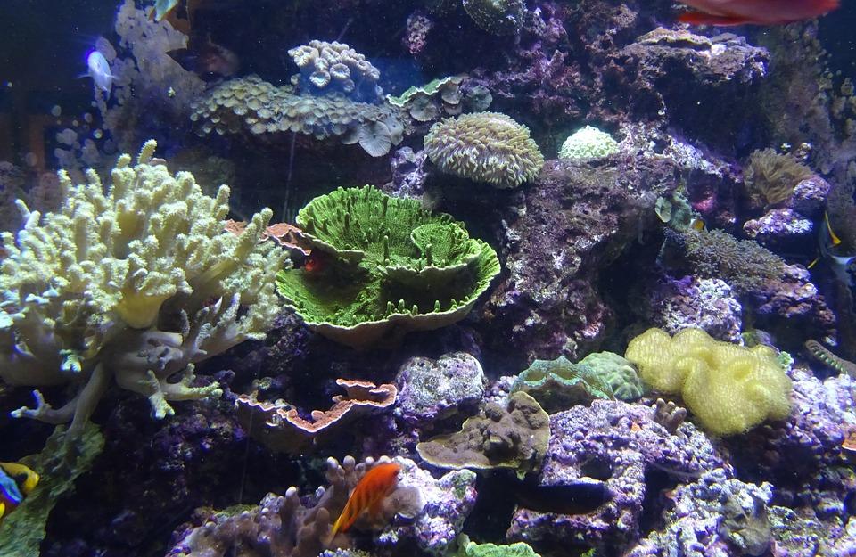 sea-urchin-1024478_960_720