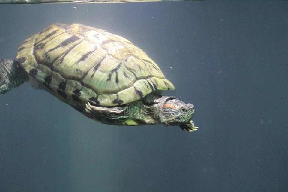 tortoise-390817_960_720