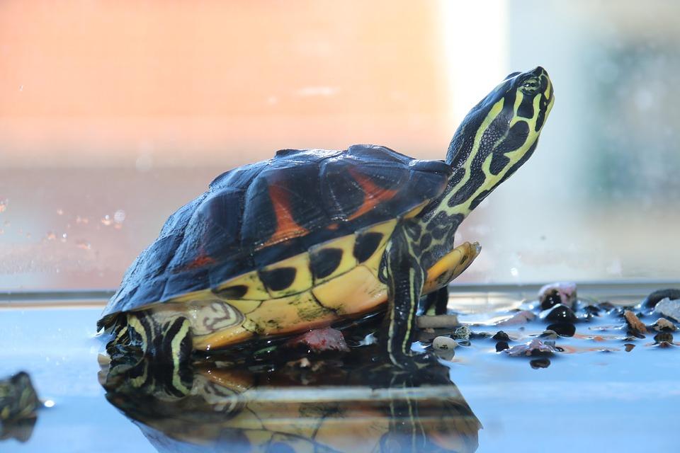 turtle-1640635_960_720