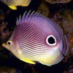 Все об аквариумных рыбках:содержание,фото,видео,уход.