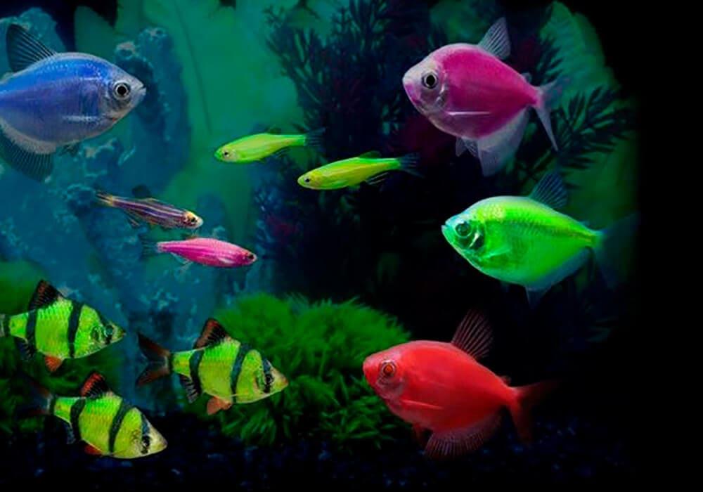 150 Разных видов аквариумных рыбок