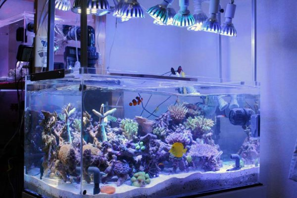 LED-Reef-and-tropical-spot-lights