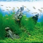 Аквариумные растения  описание, уход, разведение, содержание.