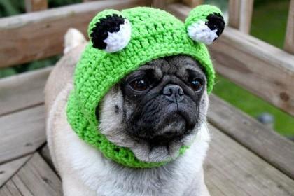 Sad-Pug-in-hats-6