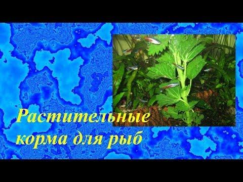 растительный корм для рыб фото