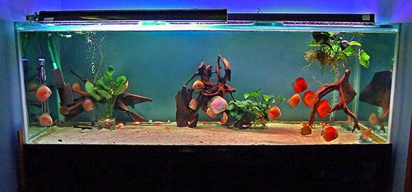 Види акваріумів - все для акваріумів.