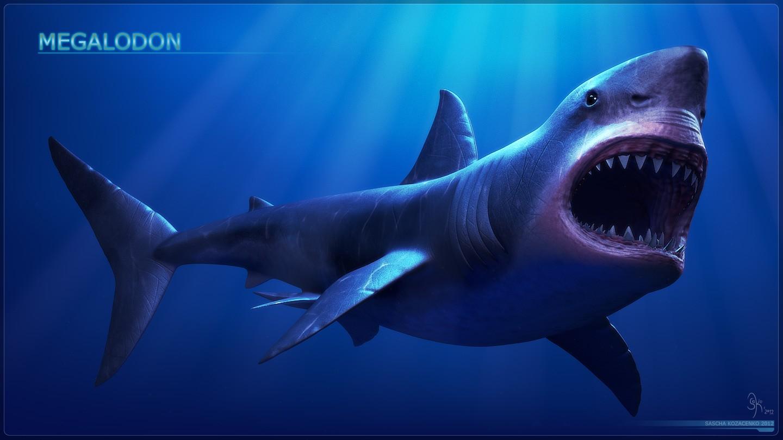 Мегалодон и Большая белая акула, доисторические родственники?