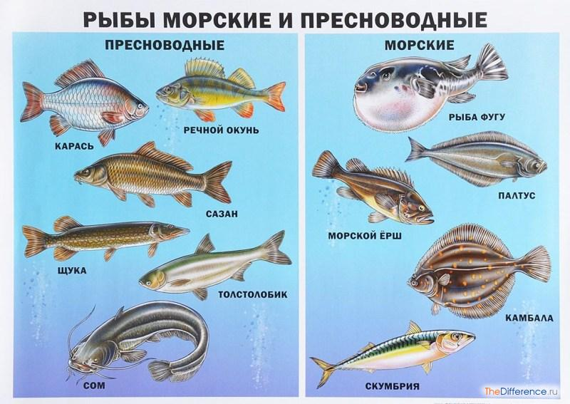 Все про рыб-учебник для детей и не только.