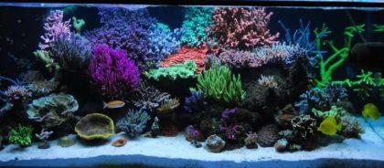 морской аквариум фото