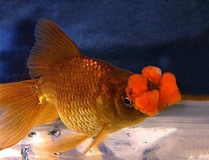 Содержание и уход за неонами в домашнем аквариуме