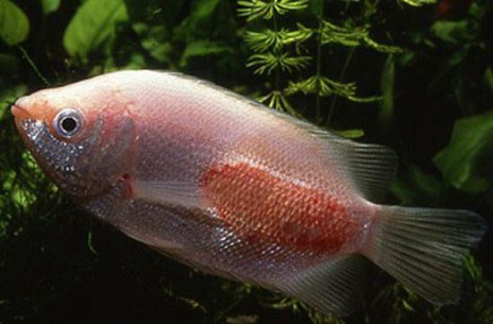 Болезни аквариумных рыб: лечение,описание,фото,симптомы,видео