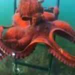 Пришельцы со дна океана.видео