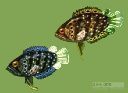 Полицентрус или Рыба обрубок