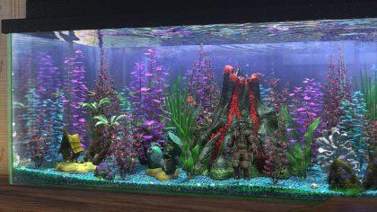 Finding Nemo Aquarium Hobby The Gnomon Workshop News.
