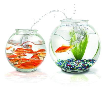 sovmestimost-rybok-v-akvariume-kakie-nyuansy-stoit-uchest-4