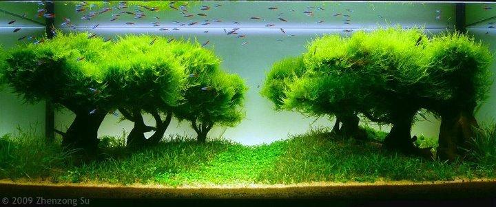 Акваскейп — природный аквариум.