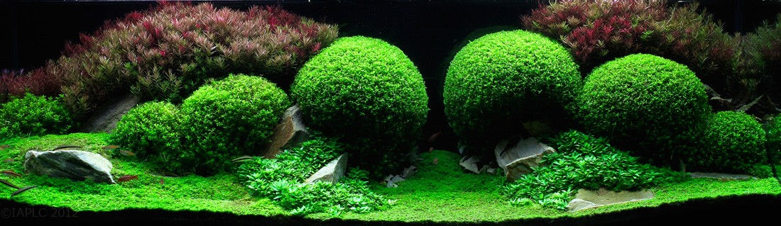 aquascaping08