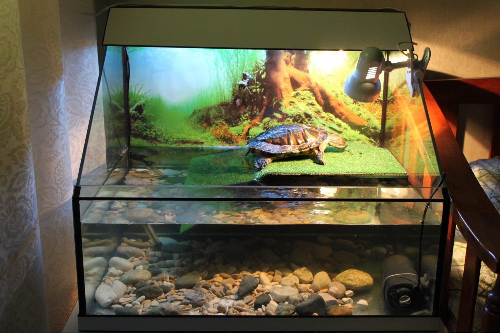 Как украсить аквариум для черепахи