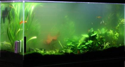 pochemu-v-akvariume-bystro-mutneet-voda