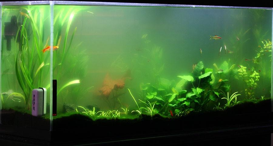 Почему мутнеет вода в аквариуме у рыбок