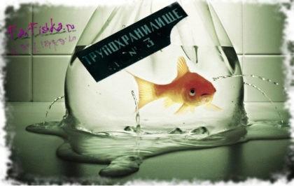 pochemu_umirajut_rybki