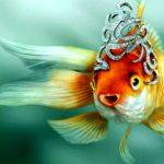 Золотые рыбки в аквариуме — видео HD 2016