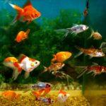 Как выбрать аквариум и аквариумных рыбок видео