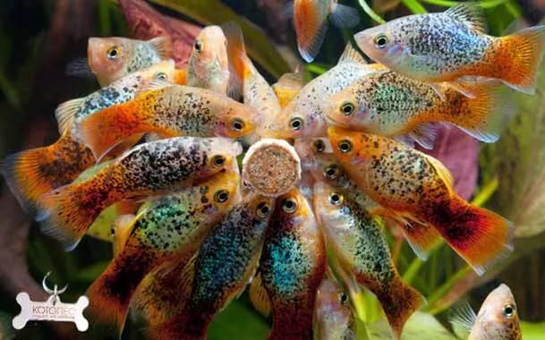 АКВАРИУМИСТИКА. Зоомагазин в Германии KolleZoo Аквариумные Рыбки