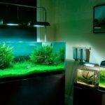 Новинки аквариумистики на выставке «ПаркЗоо»