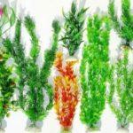 Искусственные растения для аквариума — описание фото видео