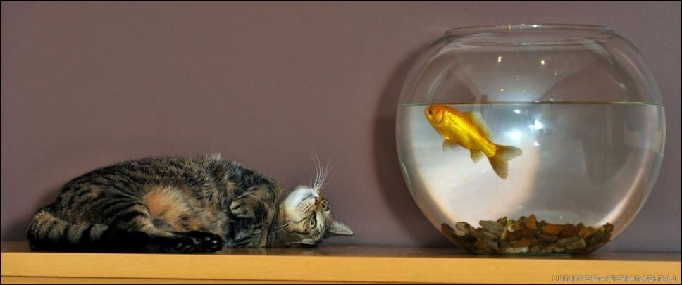 Рыбка в аквариуме смешные картинки