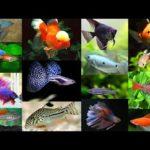 Самые умные и дорогие аквариумные рыбки