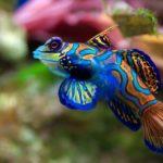 5 самых простых аквариумных рыбок для начинающих — видео