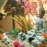 Совместимость рыб в аквариуме