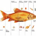 Чешутся рыбы в аквариуме что делать — описание