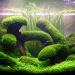 Голландский аквариум — описание фото видео