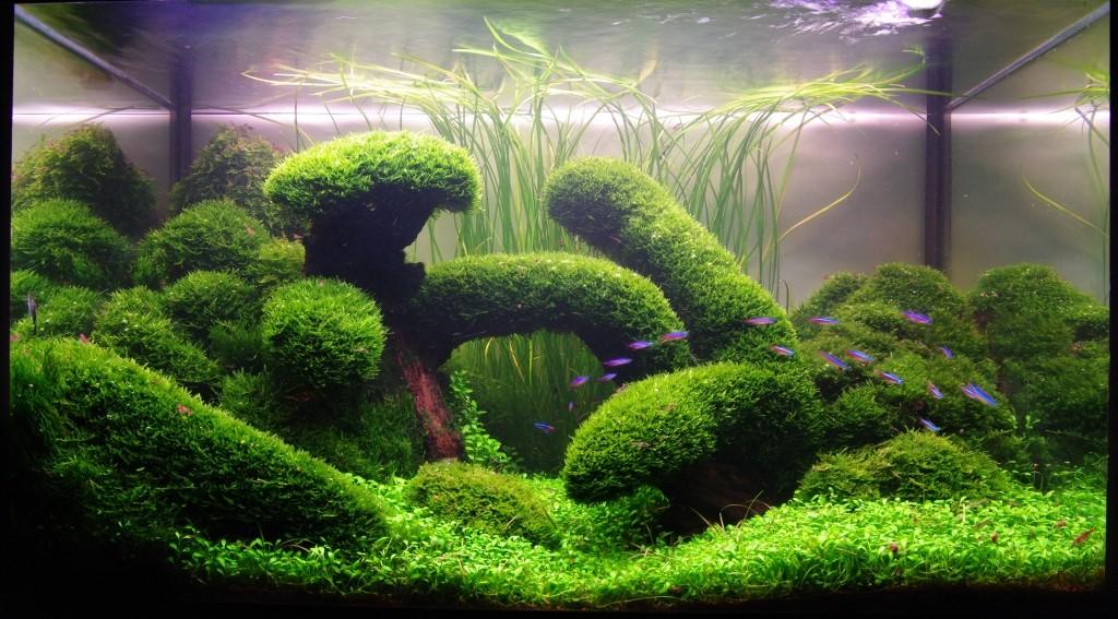 Голландский аквариум — описание ,фото ,видео