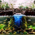 Фитофильтр для аквариума — описание обзор фото видео